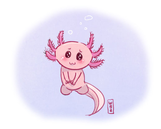 Dessin : un axolotl mignon