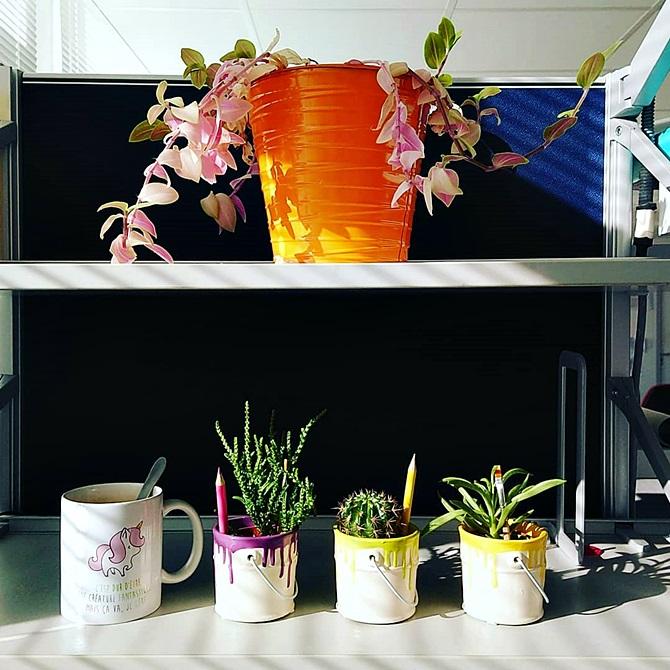 """tasse licorne """"c'est dur d'être une créature fantastique mais ça va, je gère"""" + trois succulentes dans des pots façon """"pots de peinture qui débordent"""" violet, vert et jaune et une grosse plante verte"""