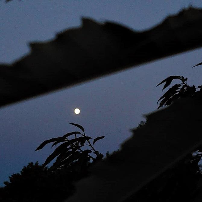 Pleine lune en arrière-plan, feuilles d'arbres en clair-obscur au premier plan